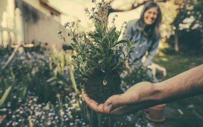 Tuin opknappen tips