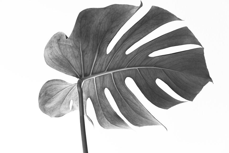 5 Mooie planten voor binnen
