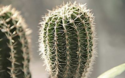 De mooiste planten voor binnen