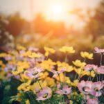 tuinhuis inrichting